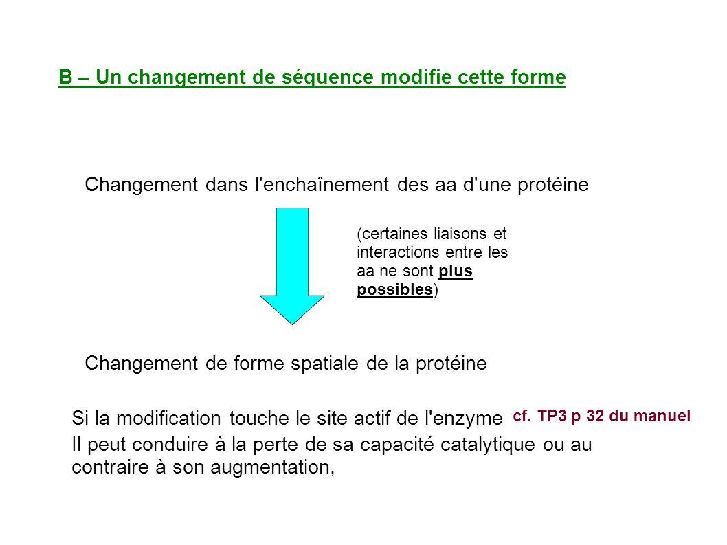 B – Un changement de séquence modifie cette forme Changement dans l enchaînement des aa d une protéine Changement de forme spatiale de la protéine (certaines liaisons et interactions entre les aa ne sont plus possibles) Si la modification touche le site actif de l enzyme cf.