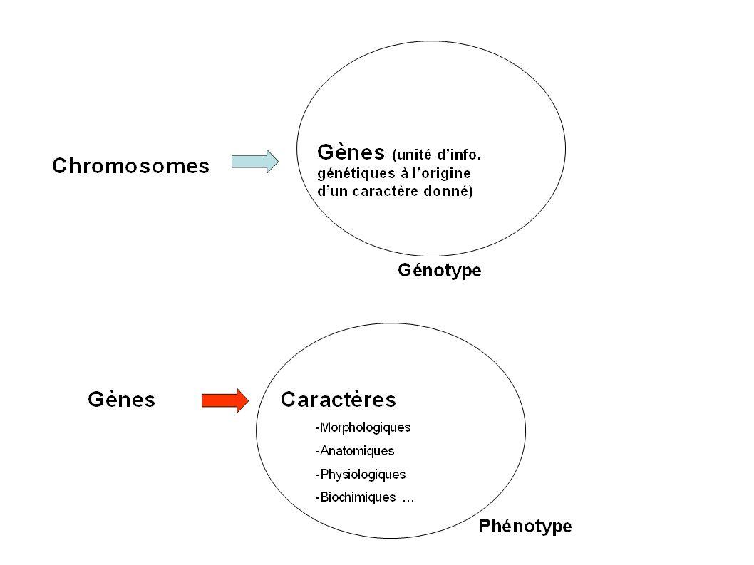 Exemple 1 : L hypercholestérolémie familiale