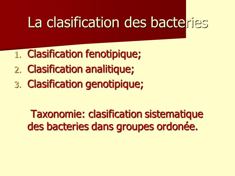 La clasification des bacteries 1.Clasification fenotipique; 2.