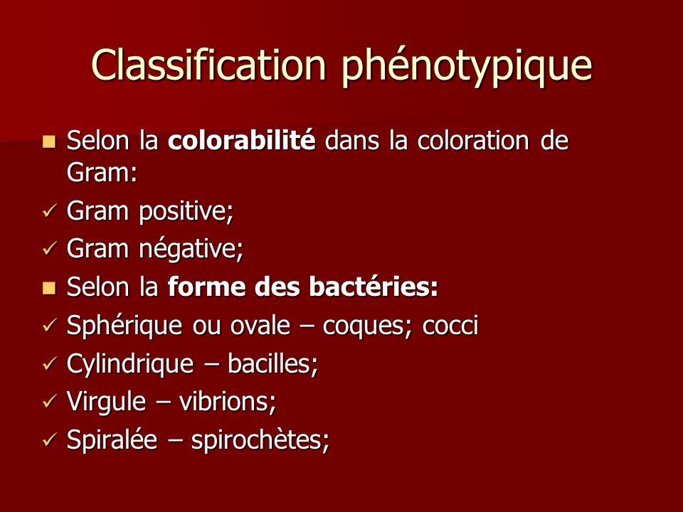 Classification phénotypique Selon la colorabilité dans la coloration de Gram: Selon la colorabilité dans la coloration de Gram: Gram positive; Gram positive; Gram négative; Gram négative; Selon la forme des bactéries: Selon la forme des bactéries: Sphérique ou ovale – coques; cocci Sphérique ou ovale – coques; cocci Cylindrique – bacilles; Cylindrique – bacilles; Virgule – vibrions; Virgule – vibrions; Spiralée – spirochètes; Spiralée – spirochètes;