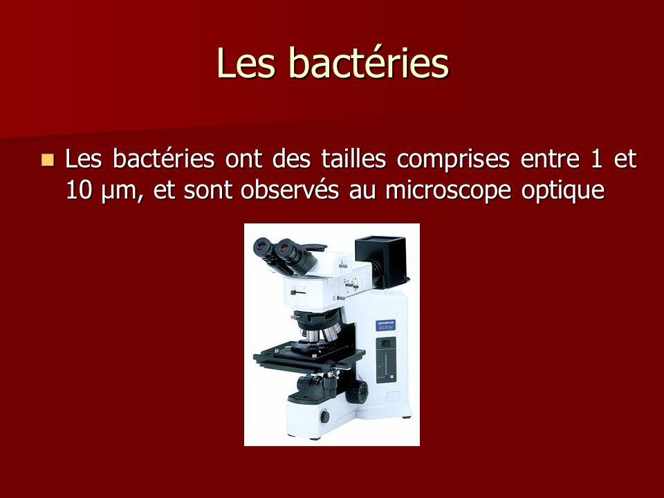 Les bactéries Les bactéries ont des tailles comprises entre 1 et 10 µm, et sont observés au microscope optique Les bactéries ont des tailles comprises entre 1 et 10 µm, et sont observés au microscope optique