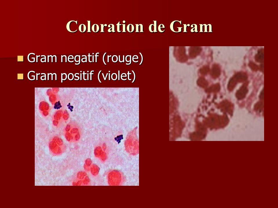 Coloration de Gram Gram negatif (rouge) Gram negatif (rouge) Gram positif (violet) Gram positif (violet)