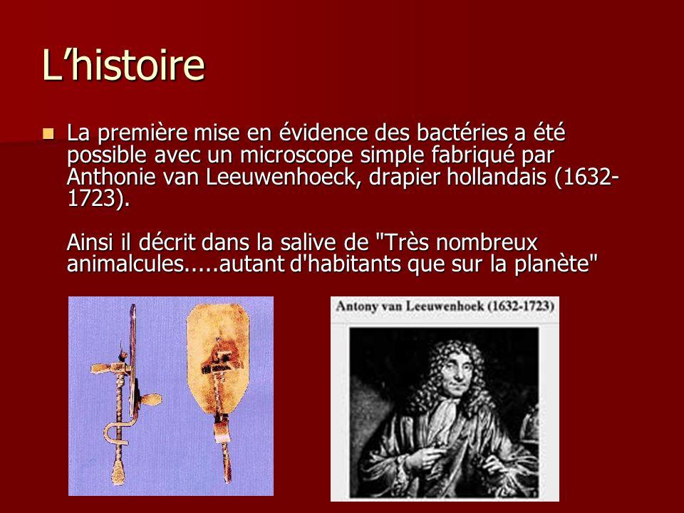Lhistoire La première mise en évidence des bactéries a été possible avec un microscope simple fabriqué par Anthonie van Leeuwenhoeck, drapier hollanda