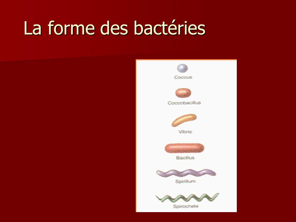 La forme des bactéries