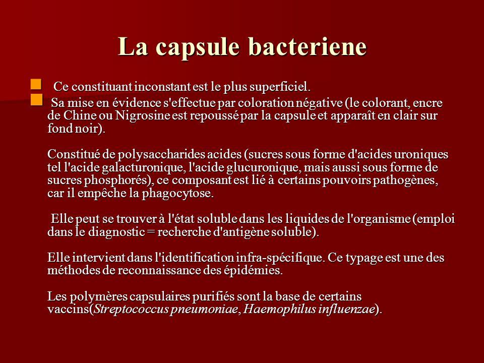 La capsule bacteriene Ce constituant inconstant est le plus superficiel. Ce constituant inconstant est le plus superficiel. Sa mise en évidence s'effe