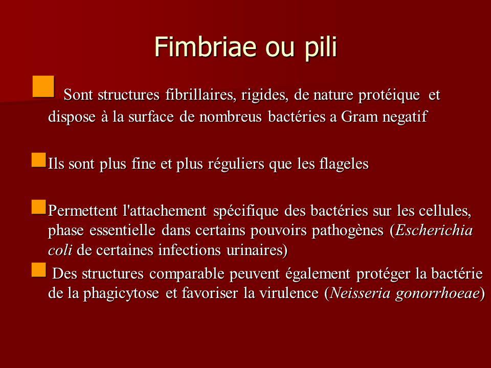 Fimbriae ou pili Sont structures fibrillaires, rigides, de nature protéique et dispose à la surface de nombreus bactéries a Gram negatif Sont structur