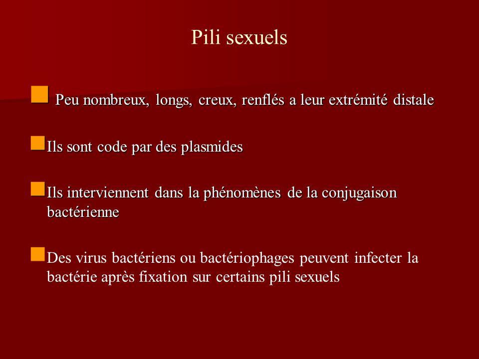 Pili sexuels Peu nombreux, longs, creux, renflés a leur extrémité distale Peu nombreux, longs, creux, renflés a leur extrémité distale Ils sont code p