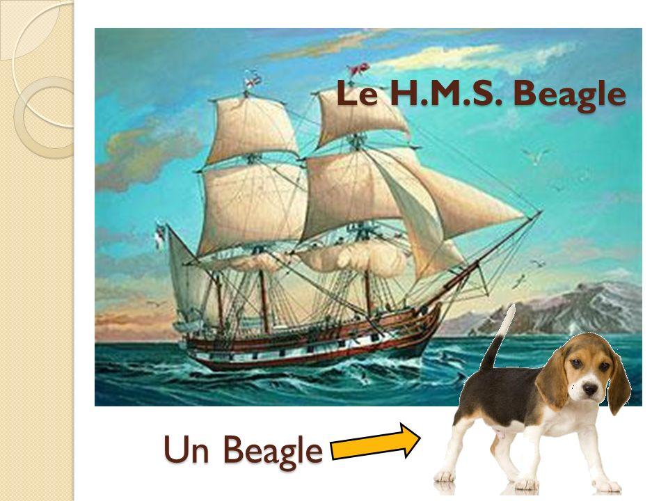 Un Beagle Le H.M.S. Beagle