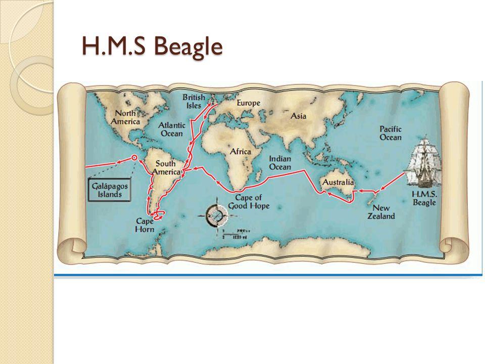 H.M.S Beagle