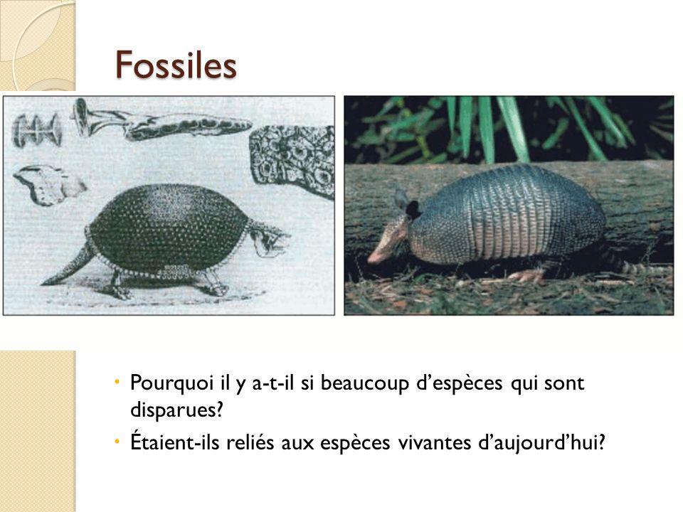Fossiles Pourquoi il y a-t-il si beaucoup despèces qui sont disparues? Étaient-ils reliés aux espèces vivantes daujourdhui?