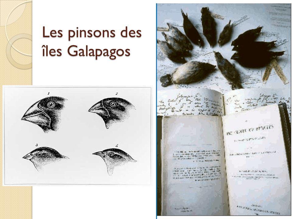 Les pinsons des îles Galapagos