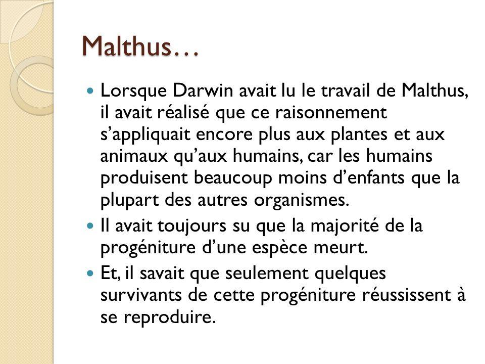 Malthus… Lorsque Darwin avait lu le travail de Malthus, il avait réalisé que ce raisonnement sappliquait encore plus aux plantes et aux animaux quaux