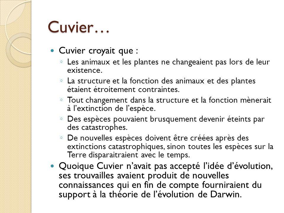 Cuvier… Cuvier croyait que : Les animaux et les plantes ne changeaient pas lors de leur existence. La structure et la fonction des animaux et des plan