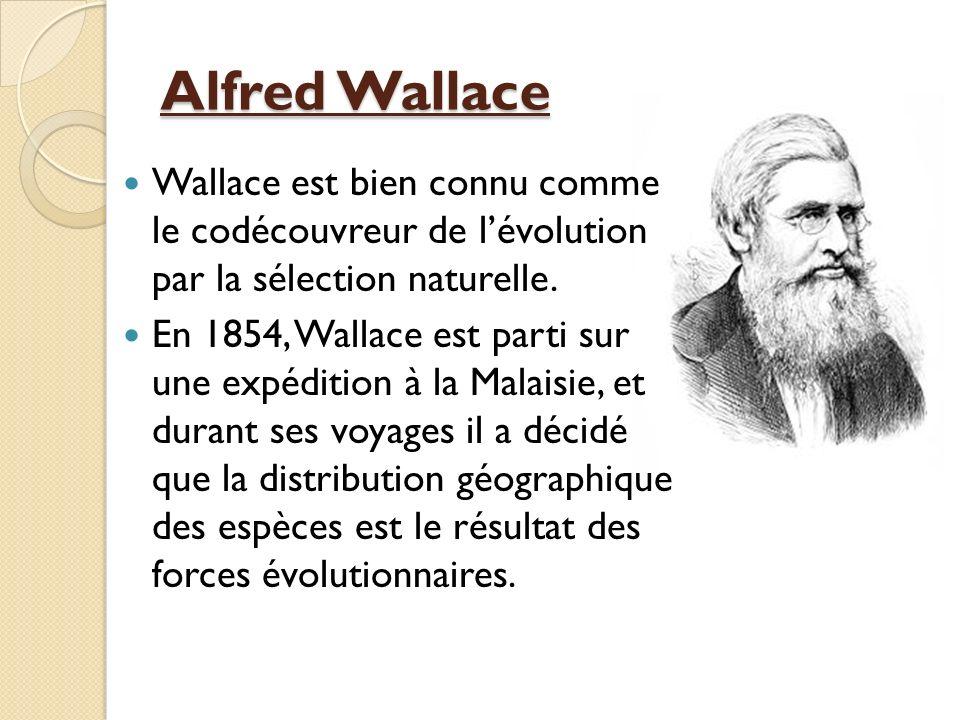 Alfred Wallace Wallace est bien connu comme le codécouvreur de lévolution par la sélection naturelle. En 1854, Wallace est parti sur une expédition à