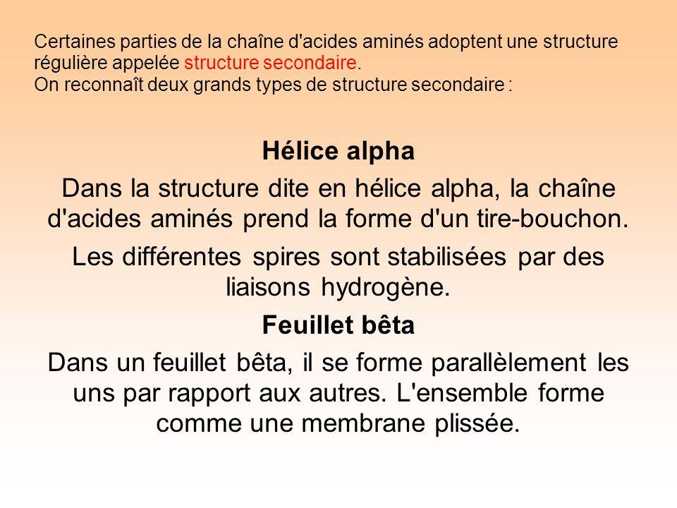 Certaines parties de la chaîne d acides aminés adoptent une structure régulière appelée structure secondaire.