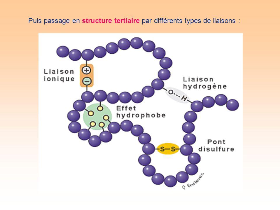 Puis passage en structure tertiaire par différents types de liaisons :