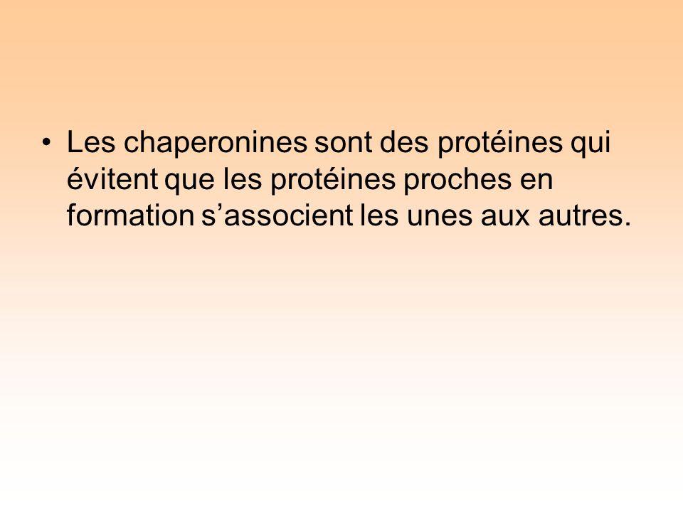 Les chaperonines sont des protéines qui évitent que les protéines proches en formation sassocient les unes aux autres.