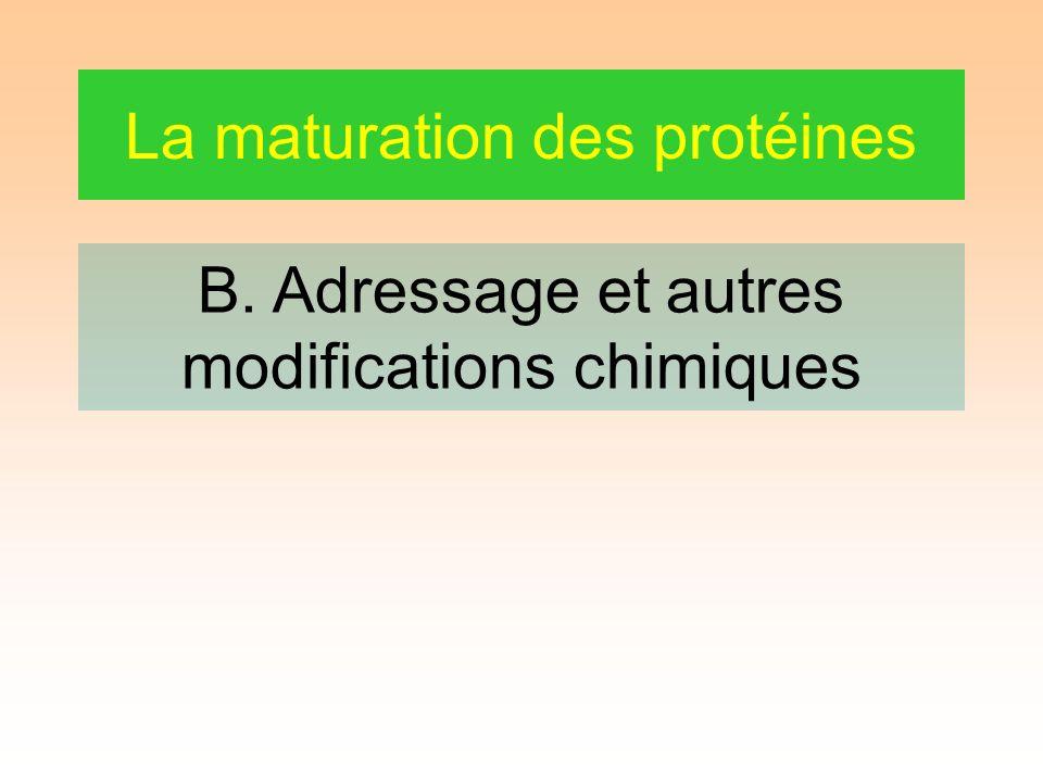 La maturation des protéines B. Adressage et autres modifications chimiques
