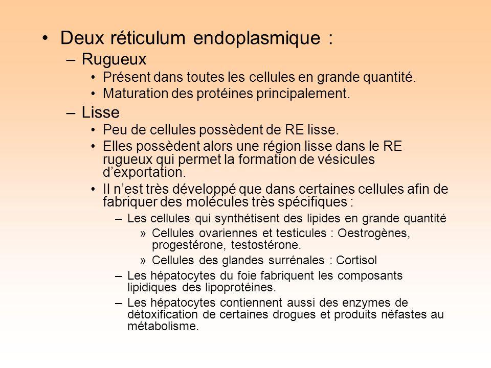Deux réticulum endoplasmique : –Rugueux Présent dans toutes les cellules en grande quantité.