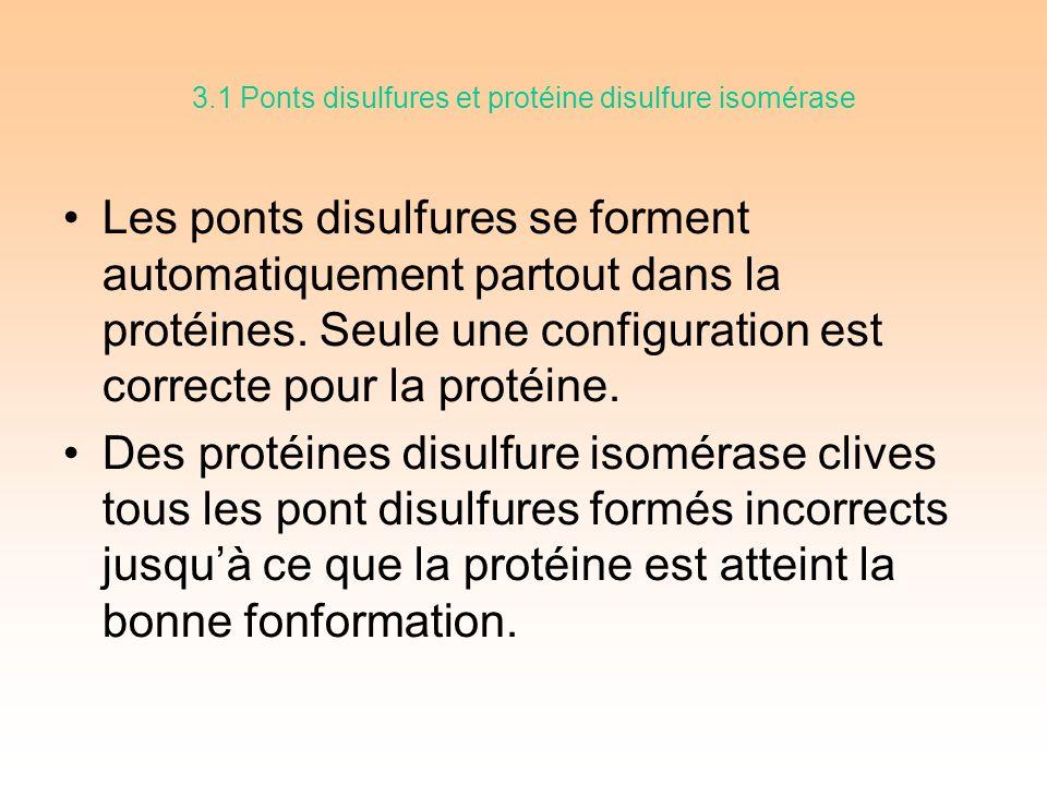3.1 Ponts disulfures et protéine disulfure isomérase Les ponts disulfures se forment automatiquement partout dans la protéines.