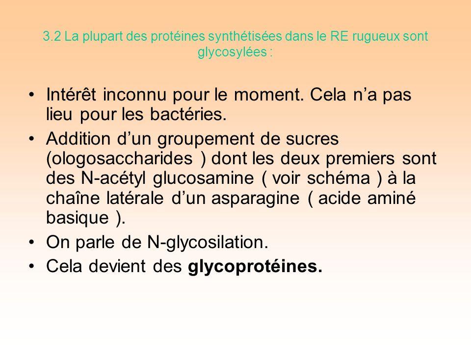 3.2 La plupart des protéines synthétisées dans le RE rugueux sont glycosylées : Intérêt inconnu pour le moment.