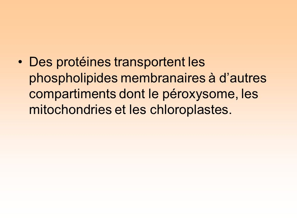 Des protéines transportent les phospholipides membranaires à dautres compartiments dont le péroxysome, les mitochondries et les chloroplastes.