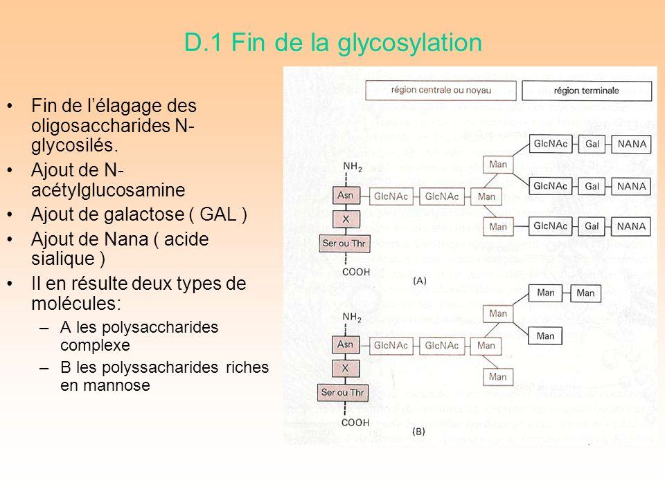D.1 Fin de la glycosylation Fin de lélagage des oligosaccharides N- glycosilés.