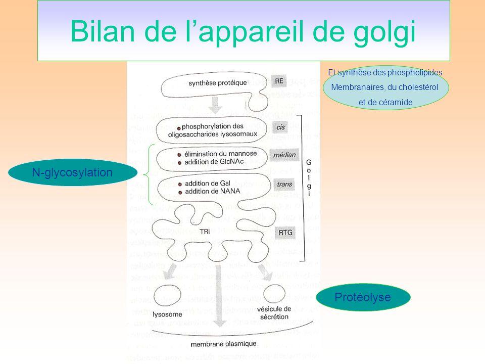 N-glycosylation Protéolyse Bilan de lappareil de golgi Et synthèse des phospholipides Membranaires, du cholestérol et de céramide