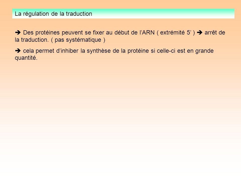 La régulation de la traduction Des protéines peuvent se fixer au début de lARN ( extrémité 5 ) arrêt de la traduction.