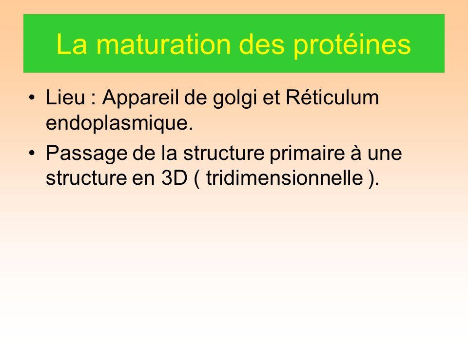 La maturation des protéines Lieu : Appareil de golgi et Réticulum endoplasmique.