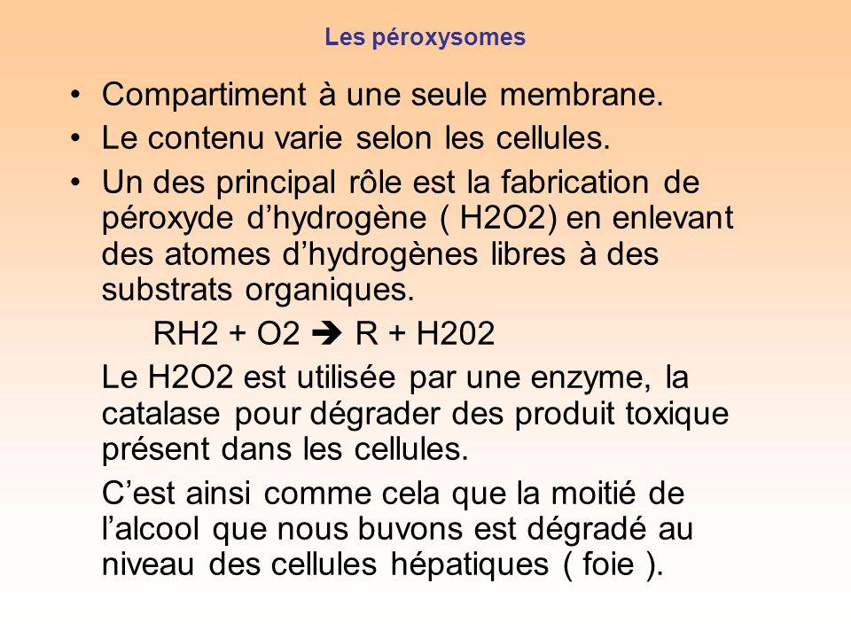 Les péroxysomes Compartiment à une seule membrane.