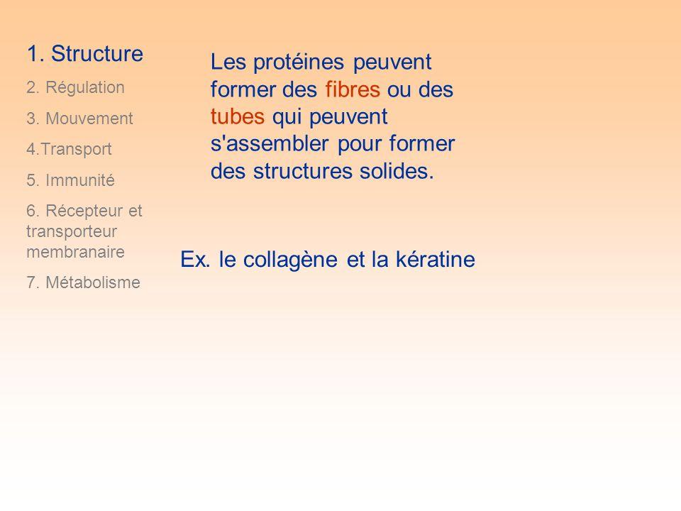 Les protéines peuvent former des fibres ou des tubes qui peuvent s assembler pour former des structures solides.