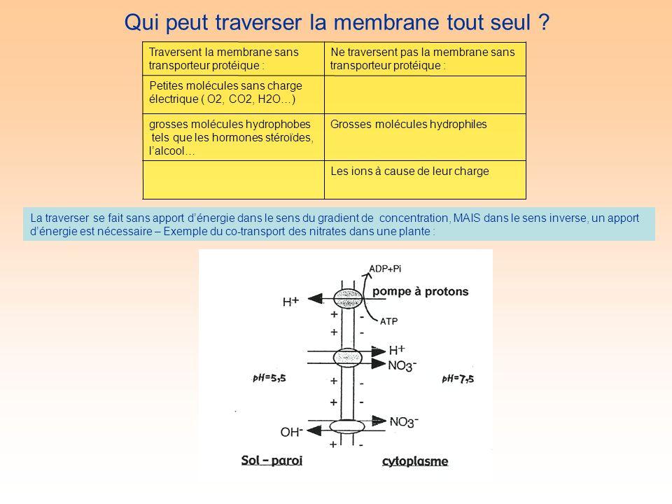 Les ions à cause de leur charge Grosses molécules hydrophilesgrosses molécules hydrophobes tels que les hormones stéroïdes, lalcool… Petites molécules sans charge électrique ( O2, CO2, H2O…) Ne traversent pas la membrane sans transporteur protéique : Traversent la membrane sans transporteur protéique : Qui peut traverser la membrane tout seul .