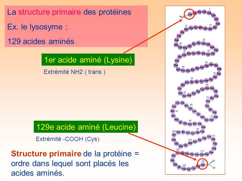 La structure primaire des protéines Ex.
