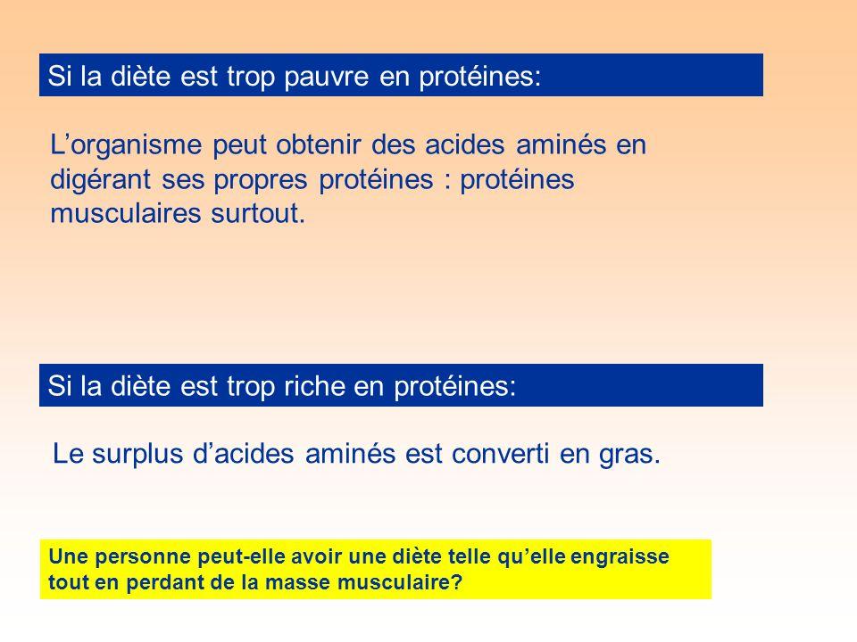 Si la diète est trop pauvre en protéines: Si la diète est trop riche en protéines: Lorganisme peut obtenir des acides aminés en digérant ses propres protéines : protéines musculaires surtout.