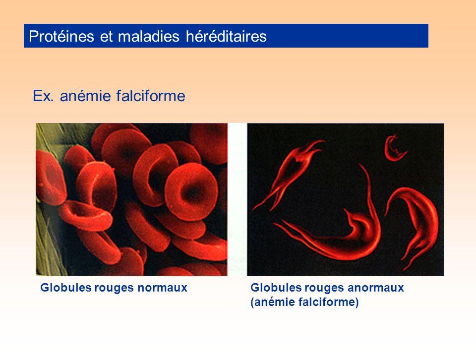 Protéines et maladies héréditaires Ex.