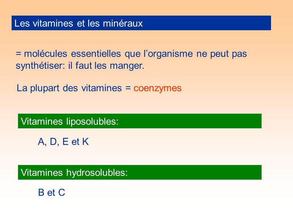 Les vitamines et les minéraux = molécules essentielles que lorganisme ne peut pas synthétiser: il faut les manger.