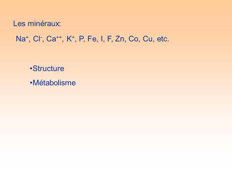 Les minéraux: Na +, Cl -, Ca ++, K +, P, Fe, I, F, Zn, Co, Cu, etc. Structure Métabolisme