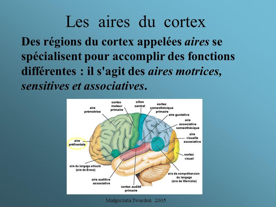 Małgorzata Twardoń 2005 Le cortex cérébral Le cortex cérébral est une mince couche (2 à 4 mm d'épaisseur) qui forme la surface de chacun des hémisphèr