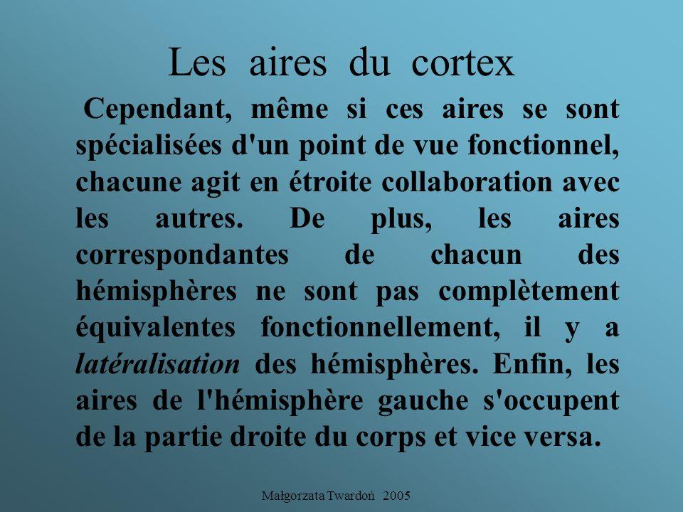 Małgorzata Twardoń 2005 Les aires du cortex Des régions du cortex appelées aires se spécialisent pour accomplir des fonctions différentes : il s'agit