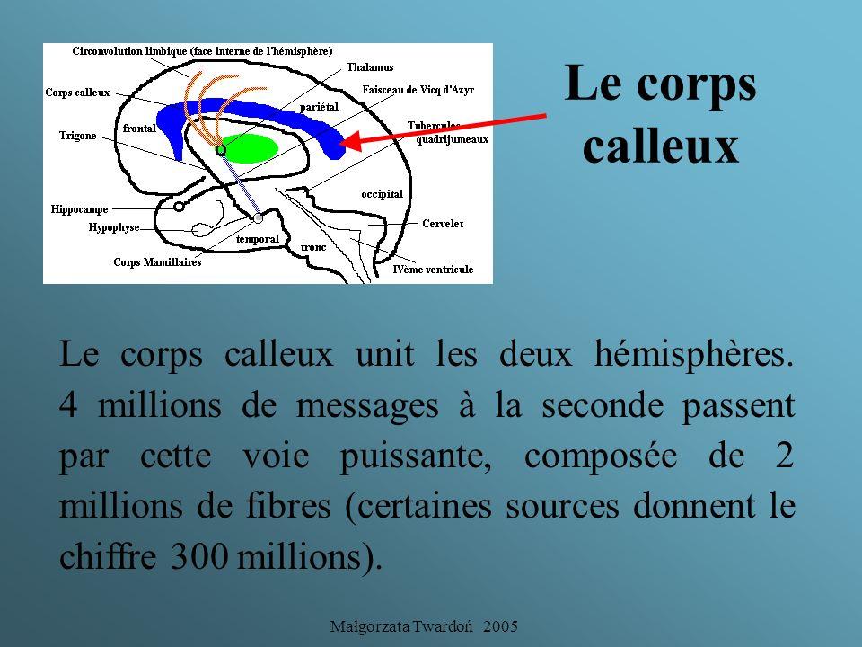 Małgorzata Twardoń 2005 Les aires du cortex Cependant, même si ces aires se sont spécialisées d'un point de vue fonctionnel, chacune agit en étroite c