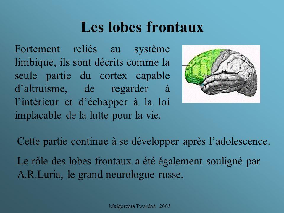 Małgorzata Twardoń 2005 Les lobes frontaux Les lobes frontaux représentent la dernière poussée cérébrale et peuvent être considérés comme un quatrième