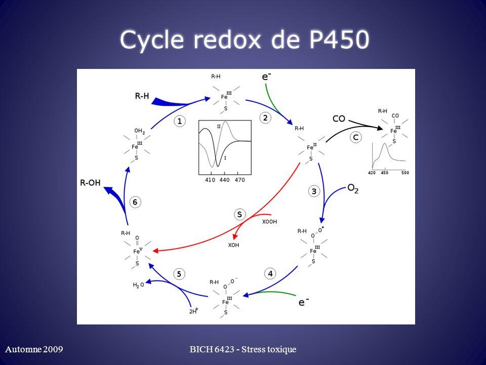 Cycle redox de P450 Automne 2009BICH 6423 - Stress toxique