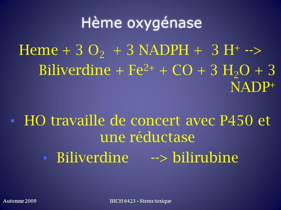 Hème oxygénase Heme + 3 O 2 + 3 NADPH + 3 H + --> Biliverdine + Fe 2+ + CO + 3 H 2 O + 3 NADP + HO travaille de concert avec P450 et une réductase Bil