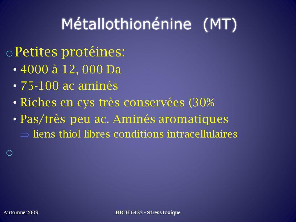 Métallothionénine (MT) o Petites protéines: 4000 à 12, 000 Da 75-100 ac aminés Riches en cys très conservées (30% Pas/très peu ac. Aminés aromatiques