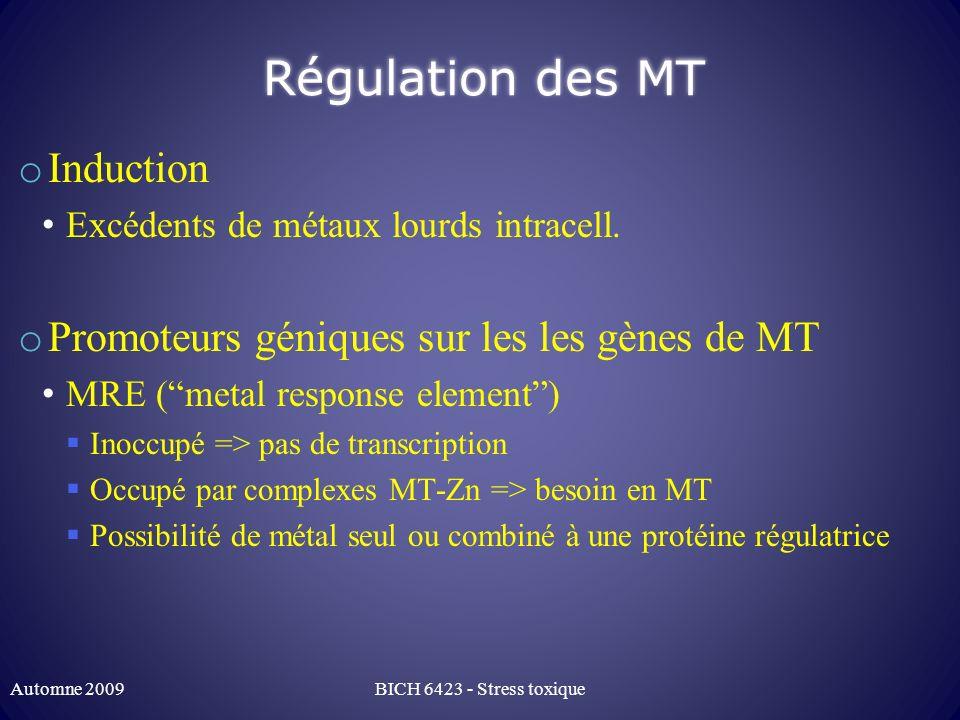 Régulation des MT o Induction Excédents de métaux lourds intracell. o Promoteurs géniques sur les les gènes de MT MRE (metal response element) Inoccup