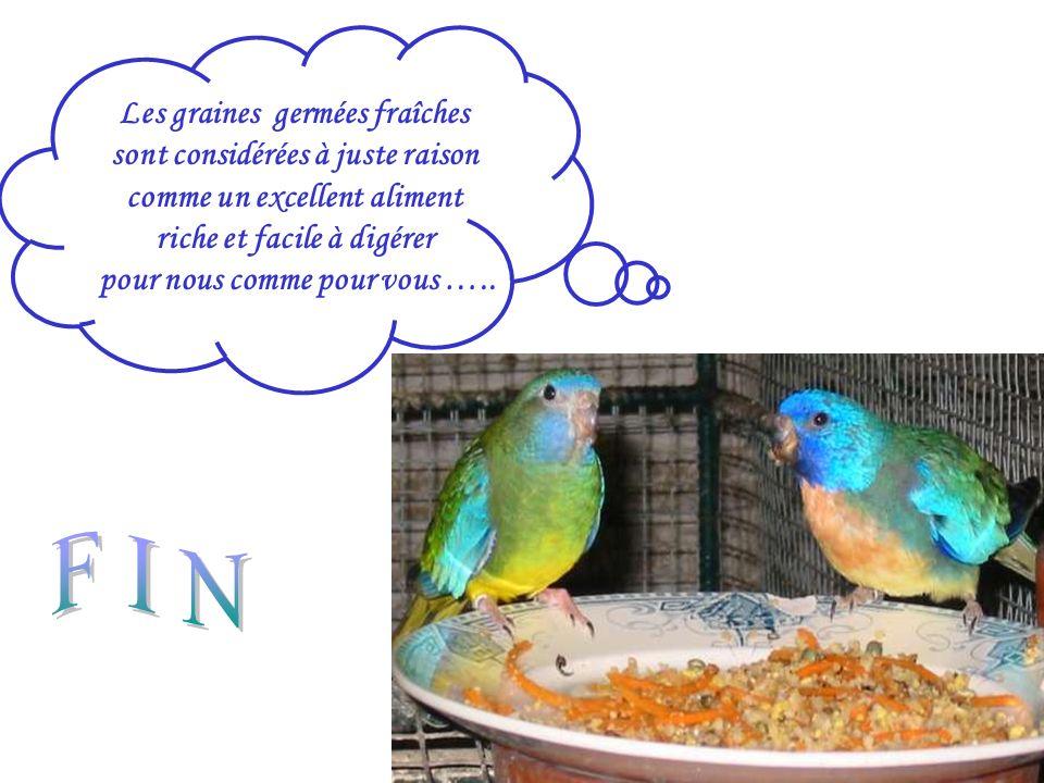 Les graines germées fraîches sont considérées à juste raison comme un excellent aliment riche et facile à digérer pour nous comme pour vous …..