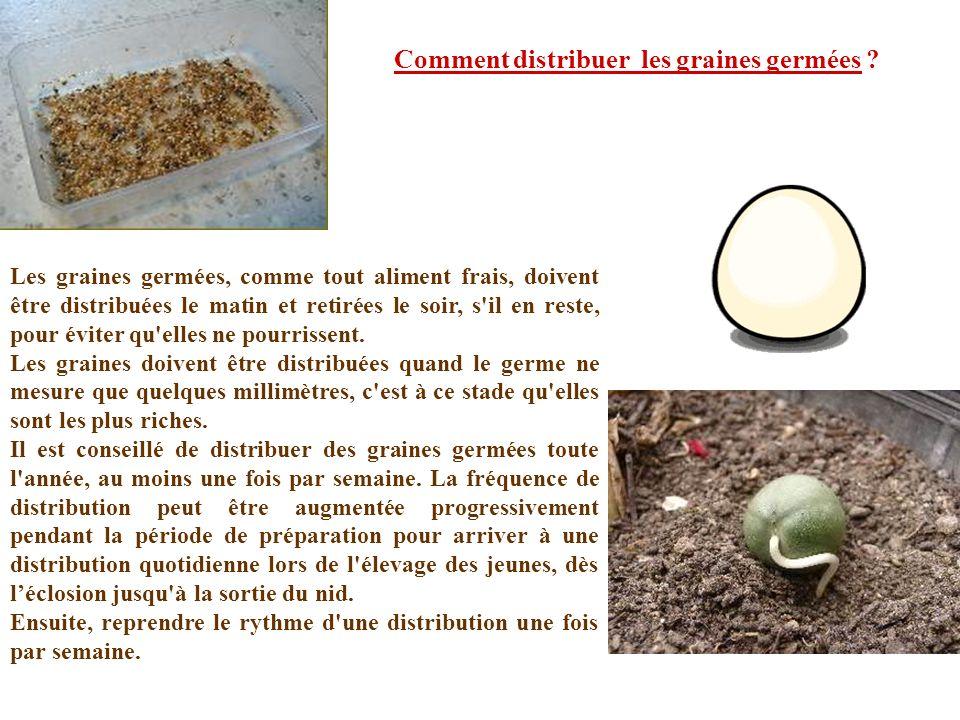 Les graines germées, comme tout aliment frais, doivent être distribuées le matin et retirées le soir, s'il en reste, pour éviter qu'elles ne pourrisse