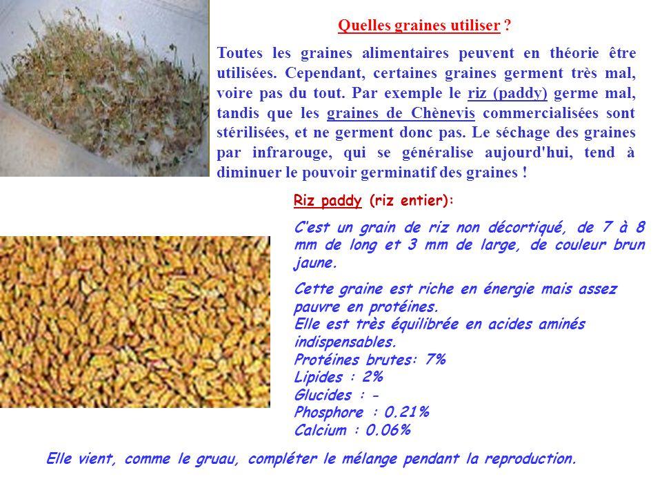 Quelles graines utiliser ? Toutes les graines alimentaires peuvent en théorie être utilisées. Cependant, certaines graines germent très mal, voire pas