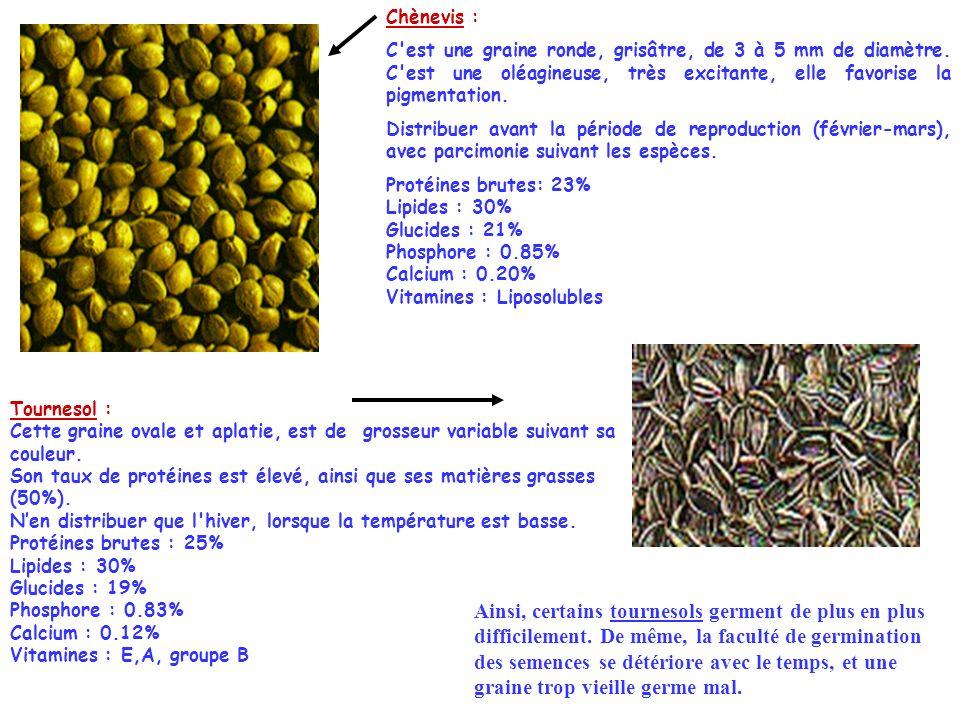 Chènevis : C'est une graine ronde, grisâtre, de 3 à 5 mm de diamètre. C'est une oléagineuse, très excitante, elle favorise la pigmentation. Distribuer